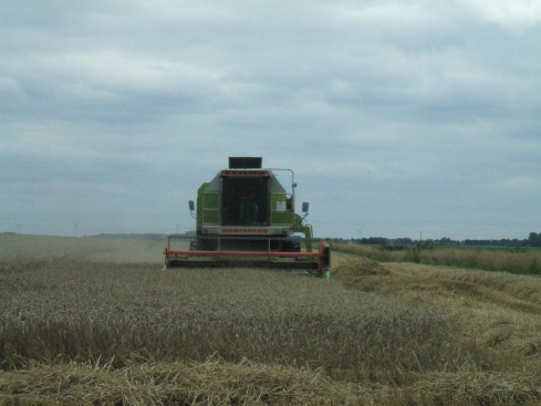 A combine harvesting this year's crop