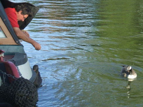 Ely-feeding the black swan